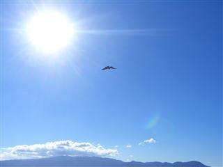 sunbird_R.jpg