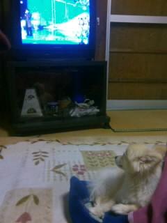 モカテレビ