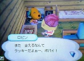 robin-hikkyoshi 006
