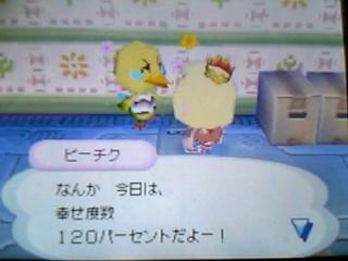 pitiku-hikkoshi1-1.jpg
