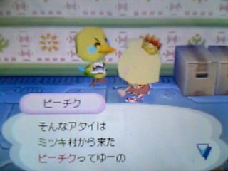 pitiku-hikkoshi2.jpg