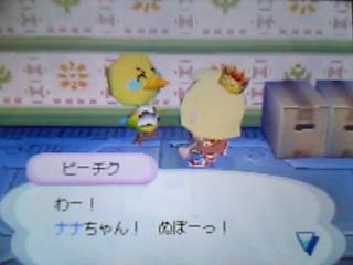 pitiku-hikkoshi3.jpg