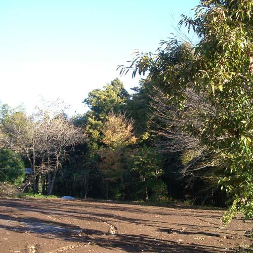 20071122-1.jpg