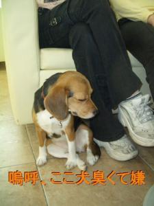犬臭いの嫌い