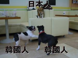 日本人と韓国人