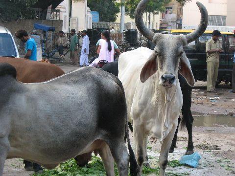 delhi01