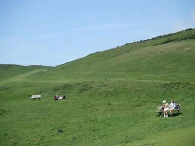 見渡す限りの牧草地