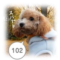 20080101050111.jpg