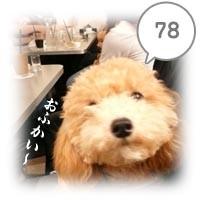 78.jpg