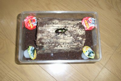 nijiiro01_20071203100719.jpg