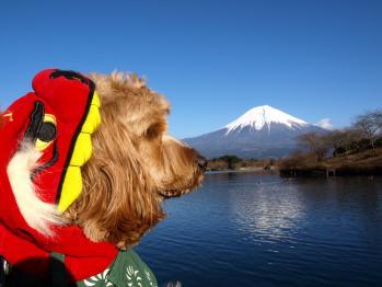 富士山と獅子舞johanUP