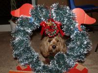 johanのクリスマス