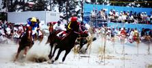horse_photo1.jpg