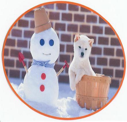白柴犬雪ダルマ