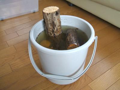 水分吸収した朽木