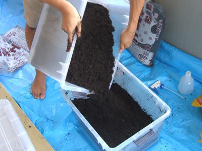 腐葉土をかける