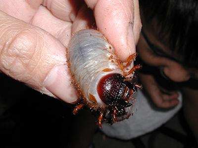 幼虫を接写してみた