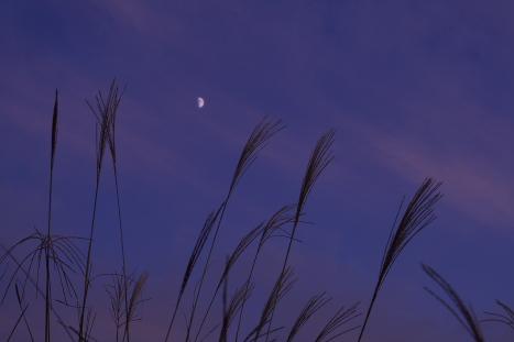 夕日071020-2