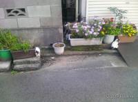 新潟市内の猫達20070612