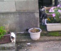 新潟市内の猫達-拡大