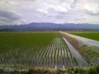 稲_20070610-01