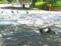 新潟市内の猫-万代編