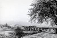 旧加治大橋と桜並木