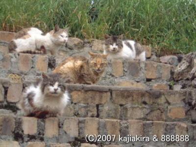 パタゴニアの猫達1