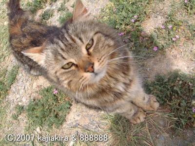 パタゴニアの猫達2