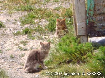 パタゴニアの猫達3