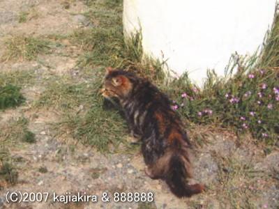 パタゴニアの猫達4