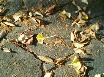 leaf-image.jpg