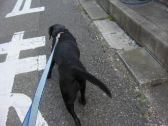 クロの散歩2
