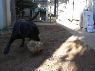 チャマボール遊び