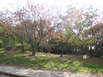 服部緑地公園の紅葉