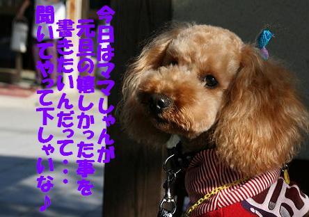 IMG_3353bbbbrg.jpg