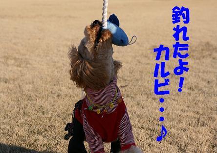 IMG_3364bbb.jpg