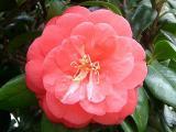 flower3_125large.jpg