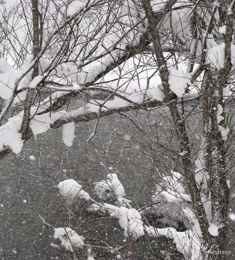 12月1日の川
