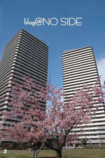桜&ビル1