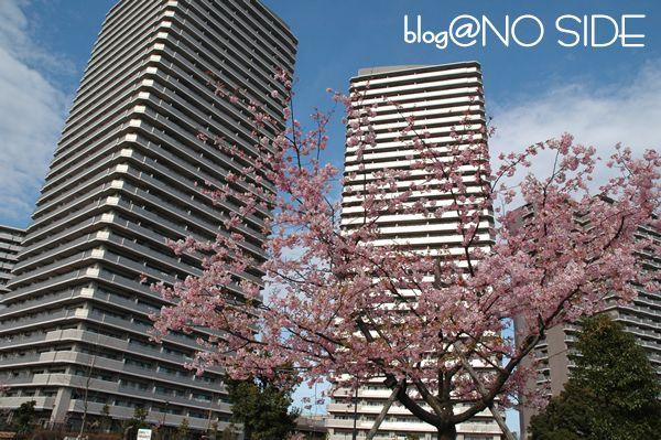 桜&ビル2
