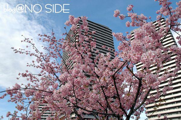 桜&ビル3