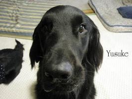 yusukehiza1.jpg