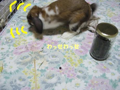 IMG_3052_20071216113025.jpg