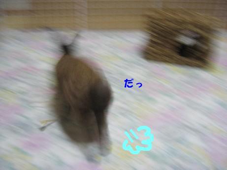 IMG_3217.jpg