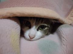 いち毛布の中