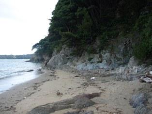 イルカ島2