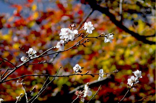桜山公園01