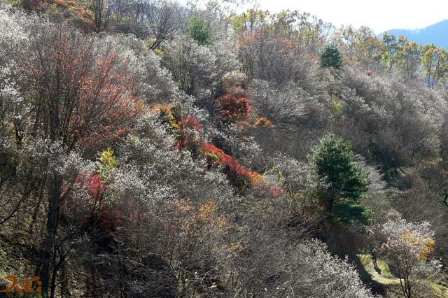 桜山公園03