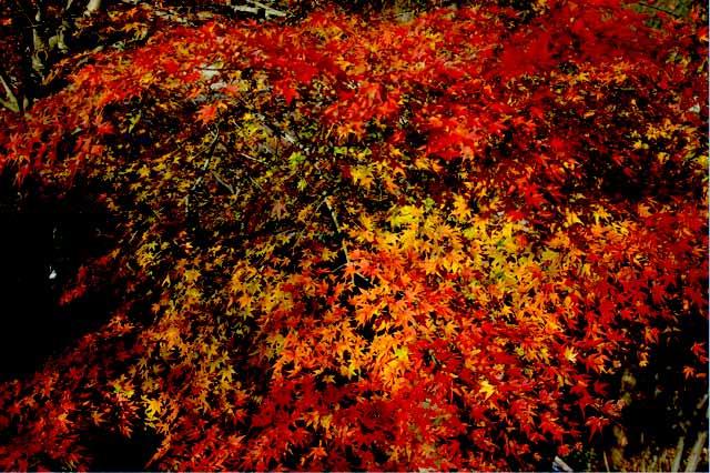 桜山公園04